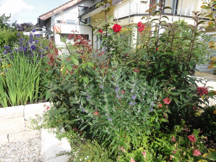 Garten mit ausgesuchten Pflanzen und Kiesflächen