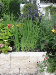Iris sibirica, Stein und Pflanze bilden eine spannende Verbindung
