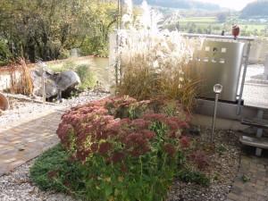 Blühende Fetthenne und Gräser. Herbstbild