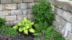 Rebmauerwerk in Kombination mit Hosta und Stauden