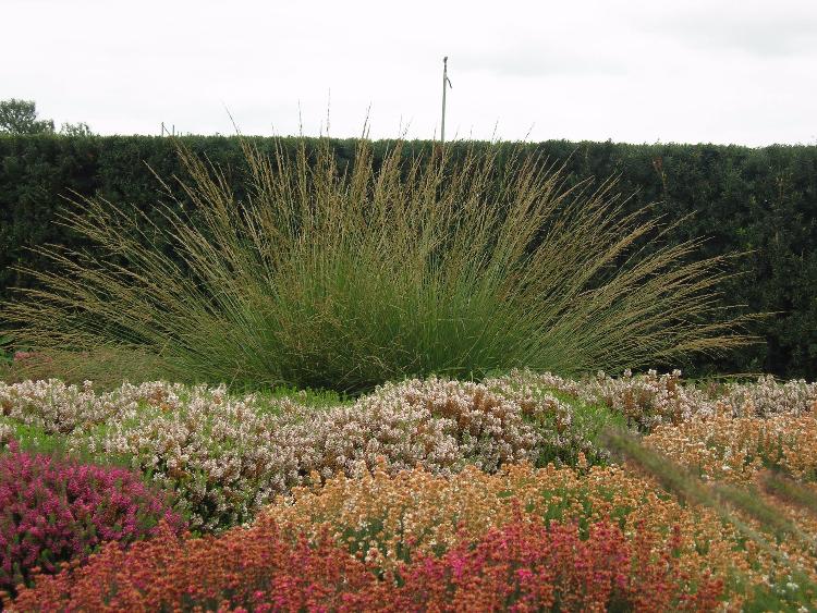 Gräser-Solitär im herbstlichen Garten