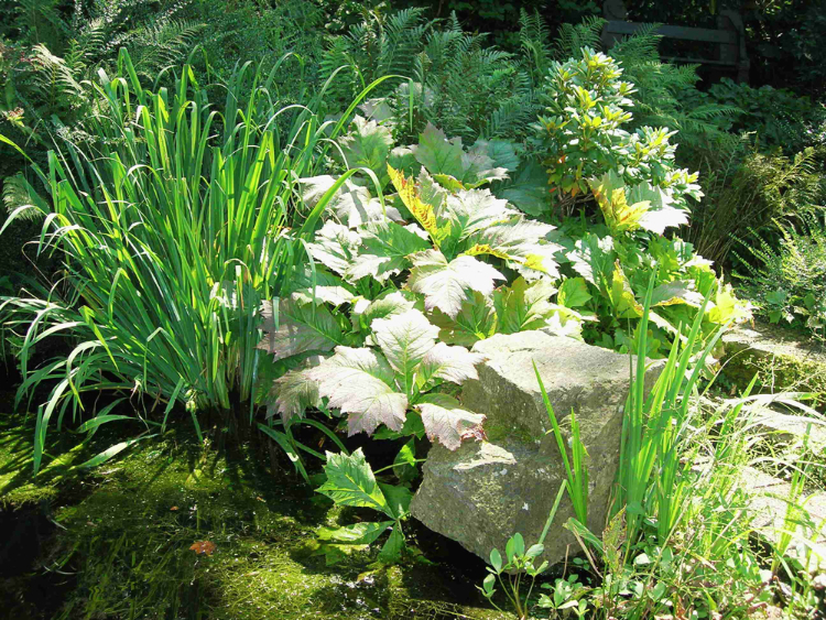 Gartenidylle und Stillleben in einem. Eine schöne Kombination von Wasser, Stein und üppigen Stauden